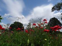 Rote Blumen, grünes Gras Stockfotos