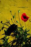 Rote Blumen, grünes Gras Stockbilder