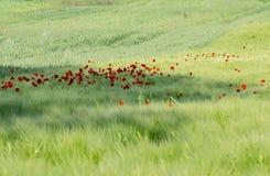 Rote Blumen, gr?nes Gras stockfotografie