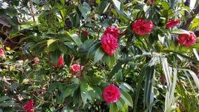 Rote Blumen-Gruppe stockbilder