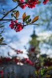 Rote Blumen im Keszthely, Ungarn Lizenzfreies Stockbild