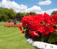 Rote Blumen im Park Stockbild