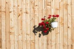 Rote Blumen im Potenziometer Stockfotografie