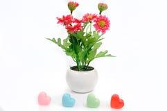 Rote Blumen im Topf der weißen Blume mit Herzen, künstlich Stockbilder