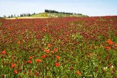 Rote Blumen-Landschaft Stockbild