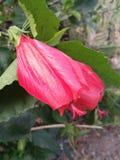 Rote Blumen meines Gartens Stockfotos