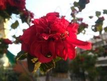 Rote Blumen mit grünen Blättern lizenzfreie stockbilder