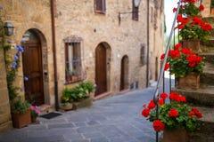 Rote Blumen in Toskana, Italien Lizenzfreie Stockfotos