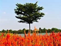Rote Blumen und Baum mit See stockfoto