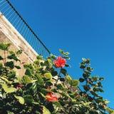 Rote Blumen und eine Steinwand Lizenzfreie Stockfotos