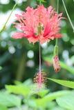 Rote Blumen und gelbe pestils stockbilder