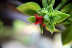 Rote Blumen- und Grünblätter Lizenzfreie Stockfotografie