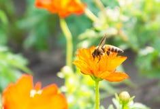 Rote Blumen und Insekten im Park Lizenzfreie Stockfotografie