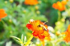 Rote Blumen und Insekten im Park lizenzfreies stockbild