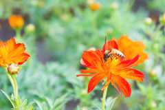 Rote Blumen und Insekten im Park Stockfotografie