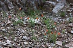 Rote Blumen unter den Steinen Lizenzfreies Stockfoto