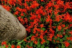 rote Blumen unter einem Baum Lizenzfreie Stockfotos