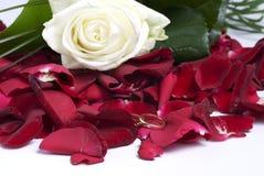 Rote Blumenblätter Stockfotografie