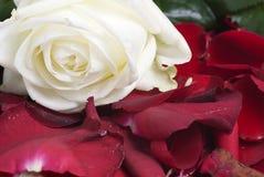 Rote Blumenblätter Lizenzfreie Stockfotos