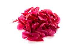 Rote Blumenblätter Lizenzfreie Stockfotografie