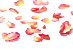 Rote Blumenblätter Stockfotos