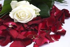 Rote Blumenblätter und Ringe Lizenzfreie Stockbilder