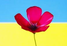 Rote Blumenflagge Stockfoto