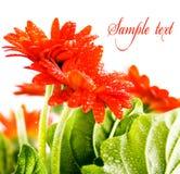 Rote Blumenkarte 1 Stockfotografie