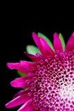 Rote Blumennahaufnahme Stockfotografie