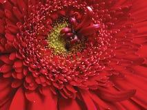 Rote Blumennahaufnahme Stockfotos
