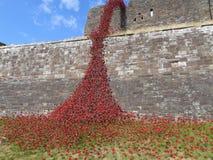 rote Blumenstraße auf einer alten Wand stockfotografie