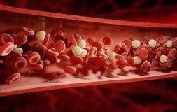 Rote Blutzellen (Erythrozyte), weiße Blutzellen (Lymphozyte und Phagozyt) und Plättchen (thrombocytes) Stockfotografie