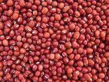 Rote Bohne Adzuki - Vigna Angularis lizenzfreie stockbilder