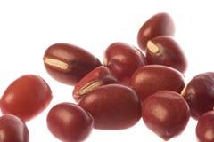 Rote Bohnen Makro Stockbild