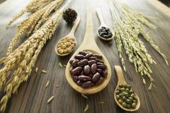 Rote Bohnen, Mungobohnen, Sojabohnenölbohnen und schwarze Bohnen Stockbild