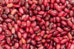 Rote Bohnen schließen oben stockfoto