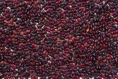 Rote Bohnen zerstreut auf den weißen Hintergrund Lizenzfreies Stockfoto