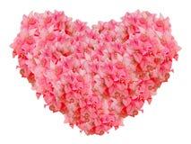Rote Bouginvillea-Blumen-Herzform lokalisiert auf weißem Hintergrund Stockbild