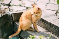 Rote Cat Sitting On Steps Outdoor Stockbild