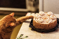 Rote Cat Sweet Lover Stockfotos