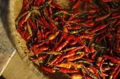 Rote chilis trocknen Lizenzfreies Stockfoto