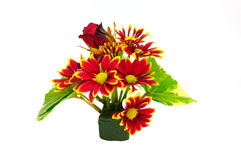 Rote Chrysanthemeblume des Blumenstraußes getrennt Stockbilder