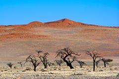 Rote Dünen Stockfoto