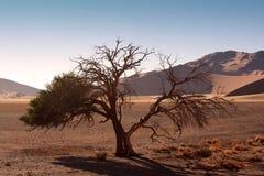 Rote Dünen von sossusvlei Stockbild