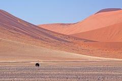 Rote Dünen von sossusvlei Lizenzfreies Stockfoto