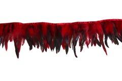 Rote dekorative Hahnfedern Stockfotos