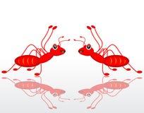 Rote Doppelameise Stockfotos