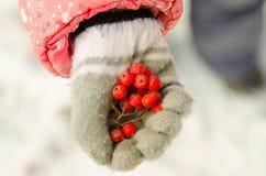 Rote Ebereschenbeeren in der Kinderhand Lizenzfreie Stockbilder