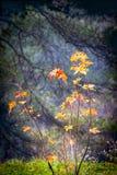 Rote Eiche des Herbstes verlässt Hintergrund Lizenzfreie Stockfotos