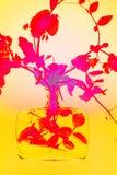 Rote Erbsenanlage in einer Glasflasche Stockfoto